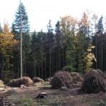 5.Kupy větví ponechány v lese